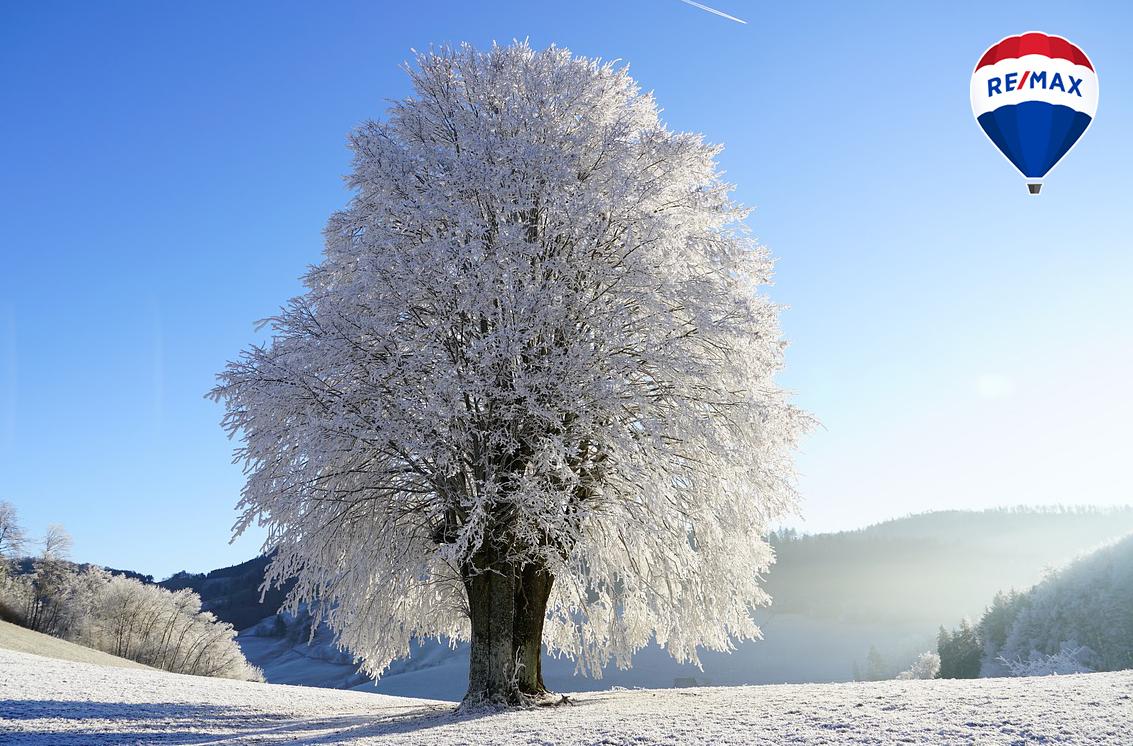 zimnny_strom_blog.jpg